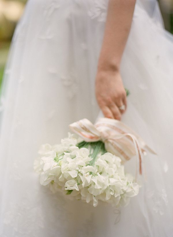A #bouquet comprised entirely of white sweet peas and tied with a pink striped ribbon.