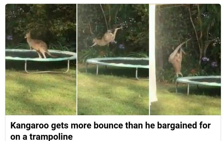 """I've made a terrible mistake"" -Kangaroo"