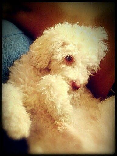 Aquiles my dog