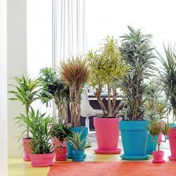 91 besten zimmerpflanzen bilder auf pinterest for Stylische zimmerpflanzen