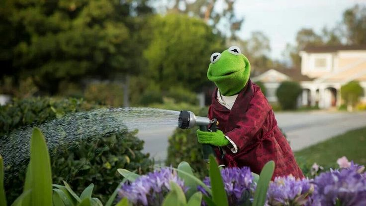 Kermit watering his flowers:) | G A R D E N | Pinterest ...