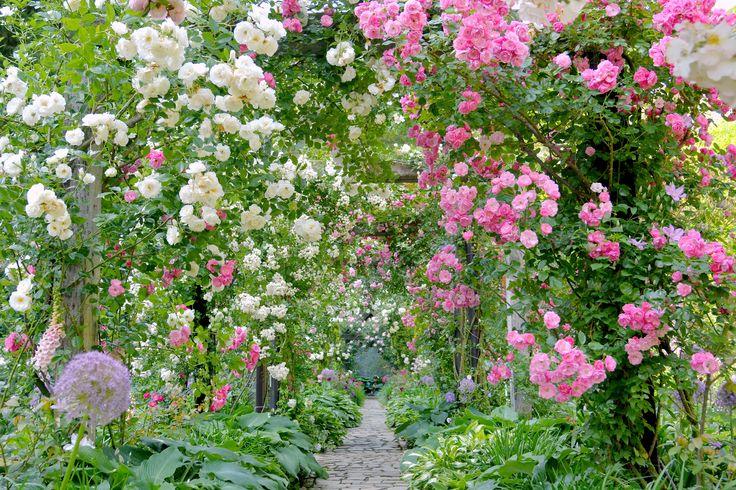 プロポーズガーデン 「プロポーズガーデン」では、圧巻の美しいバラのアーチの中を歩こう♪