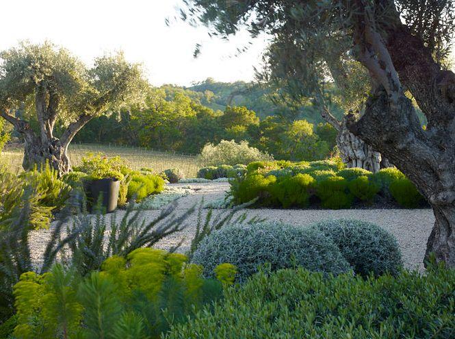 Another Garden Gawker: Andrea Cochran Landscape Architecture