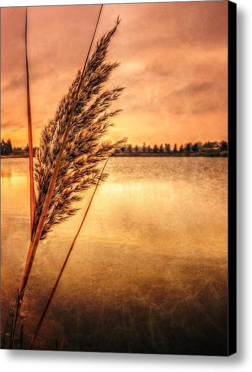 Memories Of Fall Canvas Print / Canvas Art By Garvin Hunter