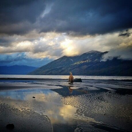 #Caburgua lake  #Pucón ...Gordon the dog plays at the beach