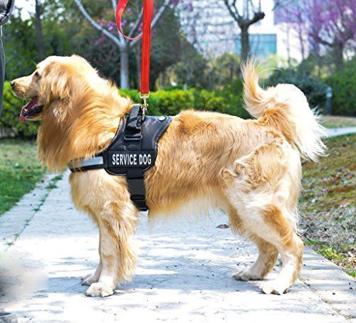 Service Dog Reflective Dog Harness With 2 Removable Patches