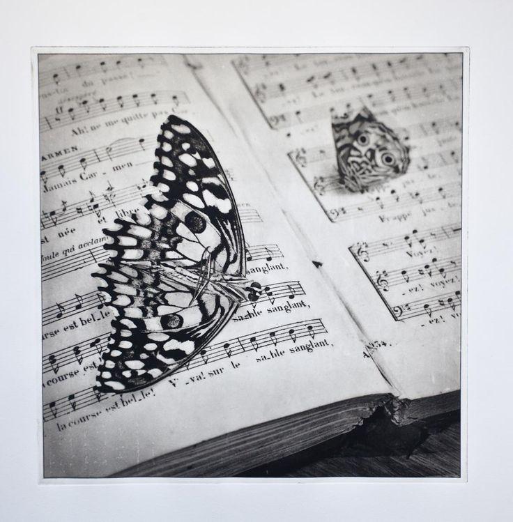 Music Moth 2011