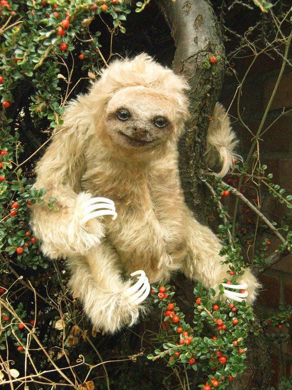 Is this a real sloth? It looks crazy...