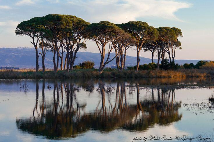Ισως η πιο εξωτική γωνιά της Ελλάδας: Στροφυλιά -Το δάσος που φθάνει ως την παραλία με τους αμμόλοφους [βίντεο] | iefimerida.gr