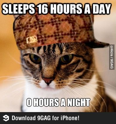 Every. F***ing. Time. scumbagcat litterbox caturday funnypics