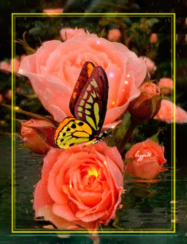 Hermosa Flor Naranja en formato gif