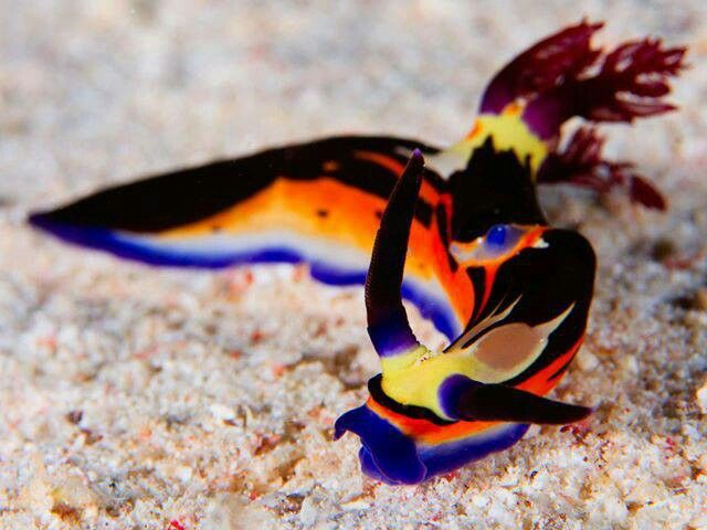 Sea slug  -- I never thought that a slug could be so beautiful!