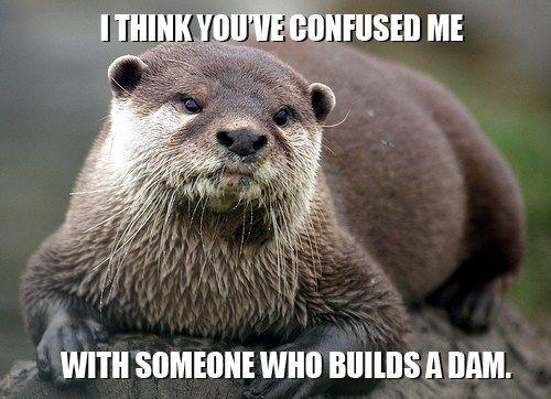 builds a dam