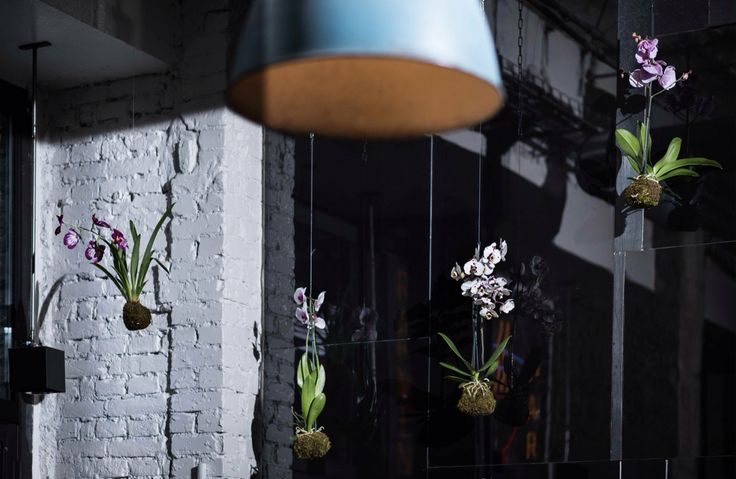 Kokedama orchidea