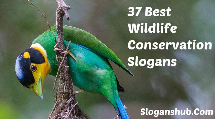 Wildlife Conservation Slogans