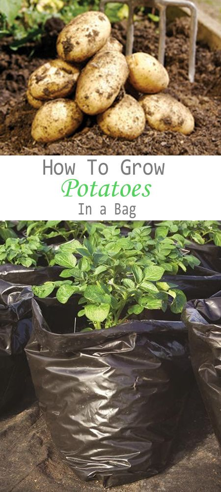 How to Grow Potatoes in a Bag