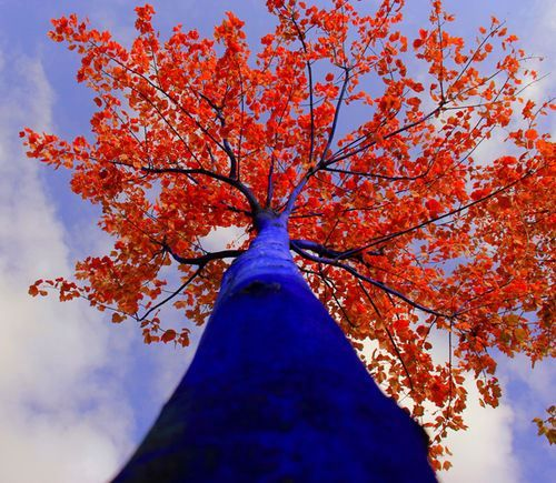 Beautiful play on color with this tree.