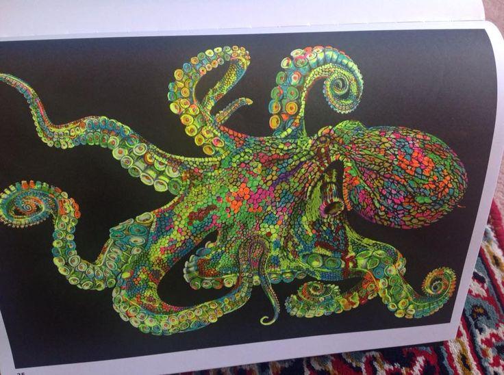 13 Best Squid Cuttlefish Octopus Images On Pinterest