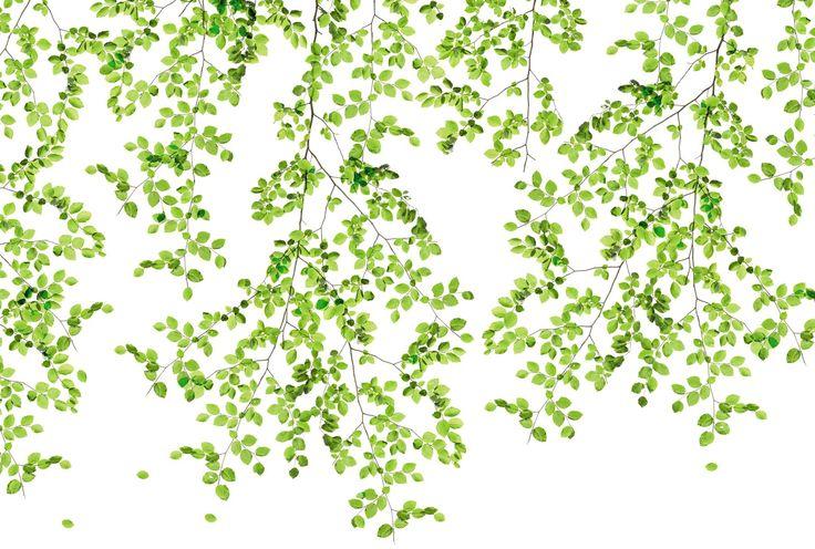 TOUCH OF SPRING - Poster feuilles d'arbres sur fond blanc