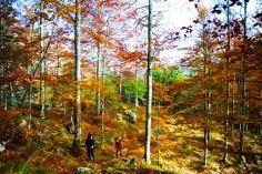 Korlátozások a Pap-réti és Sztaravodai erdészeti utakon