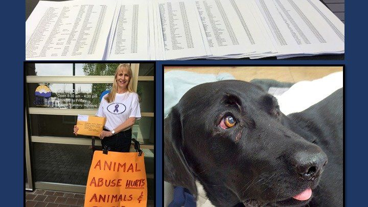 "Dear friends, Nearly a year ago we started this petition, seeking Justice for Ryder. Ryder was tortured and found with horrific injuries. Subsequently, Lindsey Hirtreiter was charged with animal cruelty. She apparently intended to plead guilty in court a few weeks ago so the signatures were thus delivered to the Crown Prosecutor. Ms. Hirtreiter's case has subsequently been adjourned to September 13, 2016 for the purpose of a ""sentence hearing."" The petition will remain open for signing…"