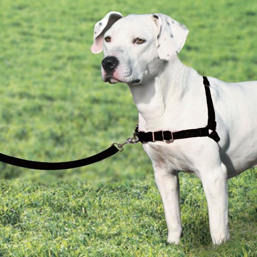The Easy Walk Harness' unique front-chest leash attachment stops pulling by tightening slightly across your dog's chest and shoulder blades. The gentle pressure steers your dog to the side and redirecting his attention back towards you. The Easy Walk Harness never causes coughing, gagging, or choking because the chest strap rests low across the breastbone, not on the delicate tracheal area.