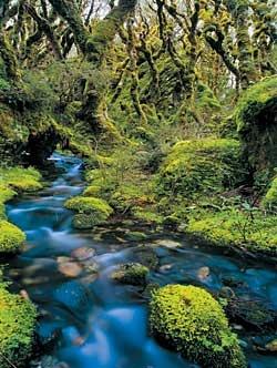 Stewart Island, New Zealand - a bit closer to home lol