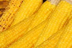Pellet Grilled Corn on the Cob - Green Mountain Grills