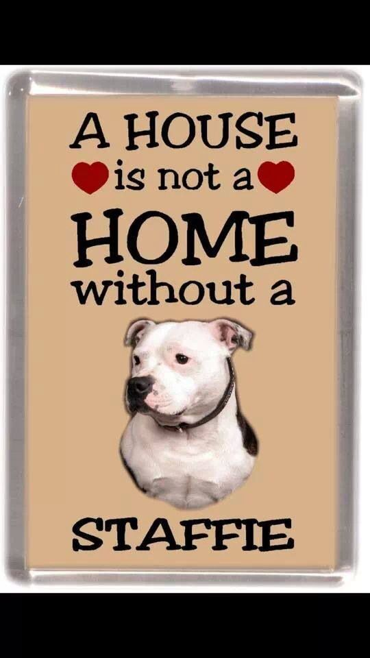 Staffie love