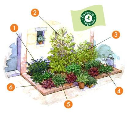 Projet aménagement jardin : L'aromatique