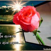 Imagenes de rosa rojas con frase de amor