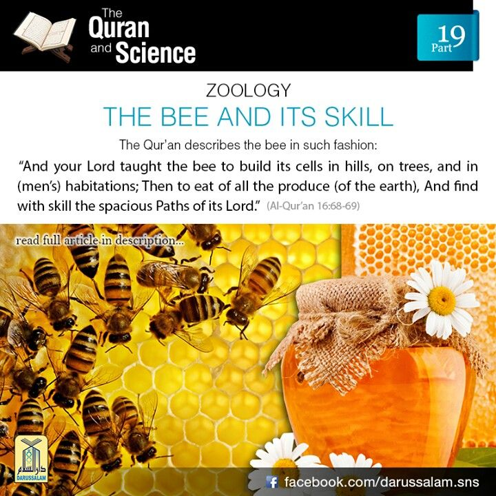 "Qur'an and Science: 19. The Bee and its Skills: ""And thy Lord taught the Bee to build its cells in hills, On trees, and in (men's) habitations; Then to eat of all The produce (of the earth), And find with skill the spacious Paths of its Lord."" [Al-Qur'an 16:68-69] Von-Frisch received the Nobel Prize in 1973 for his research on the behaviour and communication of the bees. The bee, after discovering any new garden or flower, goes back and tells its fellow bees the exact direction and map to…"