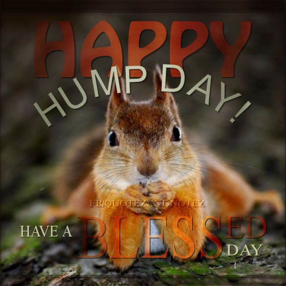 Happy Humpday                                                                                                                                                                                 More