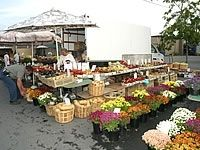Friday is Market Day at Port Colborne Farmers' Market in Ontario 6am - 1pm on Market Square in front of City Hall at 66 Charlotte Street   http://www.farmersmarketonline.com/fm/PortColborneFarmersMarket.html