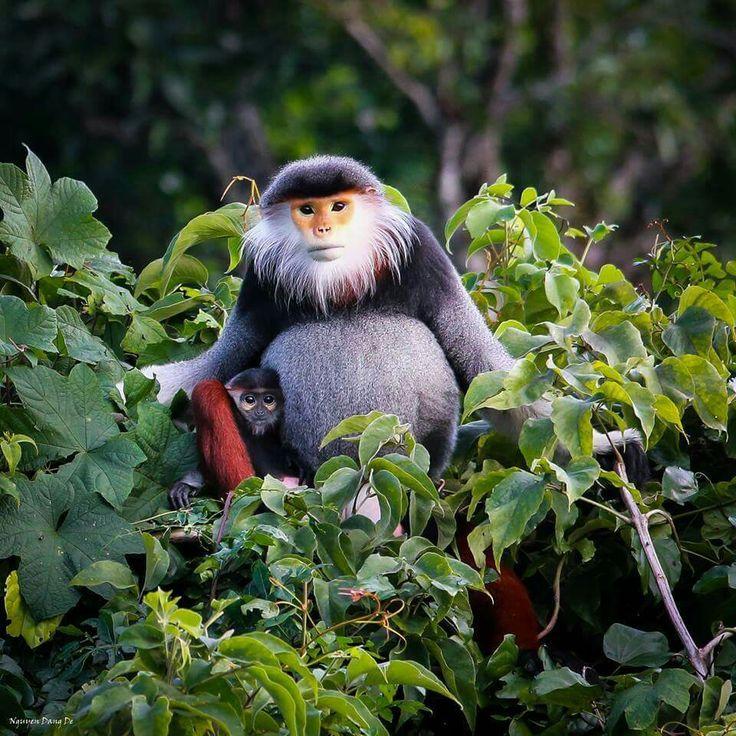 Cara amarilla de Madagascar .. im not sure if a new species or already known