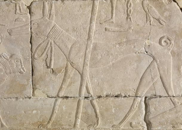 Ancient egyptian relief carving of a dog old kingdom