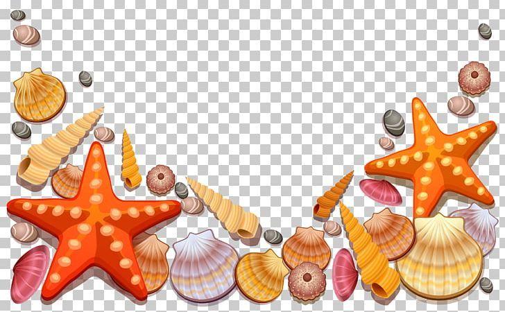 Transparent Seashell Clipart Sea Shells Seashells Seashell Clipart Sea Shells Clip Art