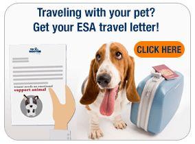 Best Service Registration For Flying With Dog