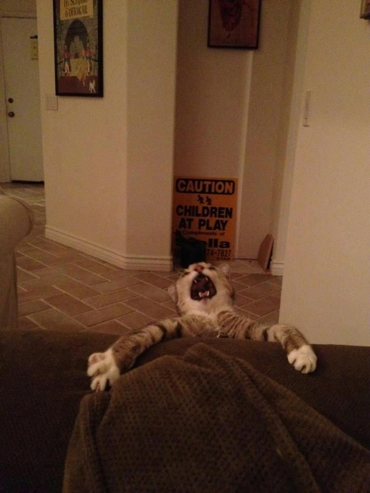 funnyReal Life, Laugh, Funny Cat, Funny Pictures, Lion King, Disney, So Funny, Cat Memes, Animal