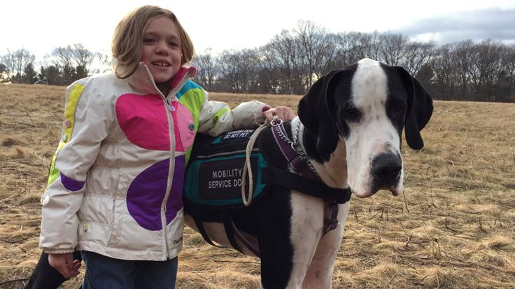 George the Great Dane service dog helps Bella get where she needs to go.