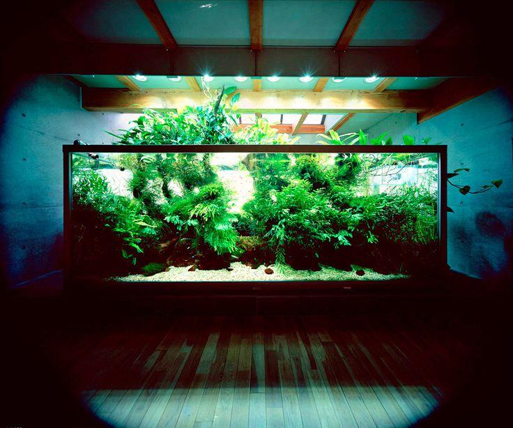 Aquascape at Nature Aquarium Takashi Amano by Aqua Design Amano .