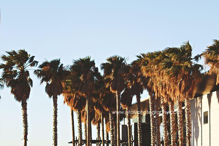 palmiers port bastia corse