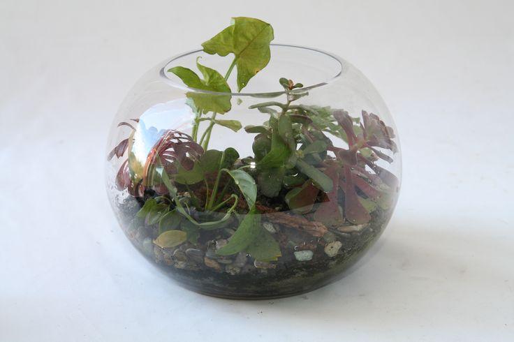 Small fishbowl