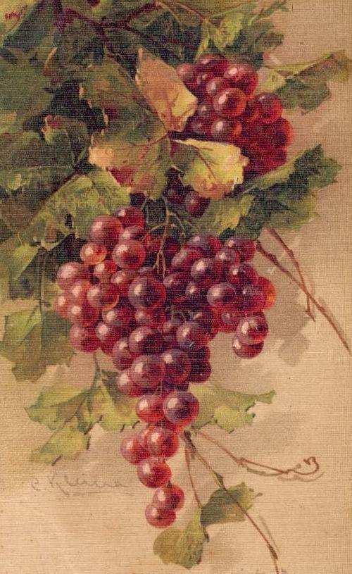 фрукты,+ягоды,+натюрморты+(43).jpg (500×815)