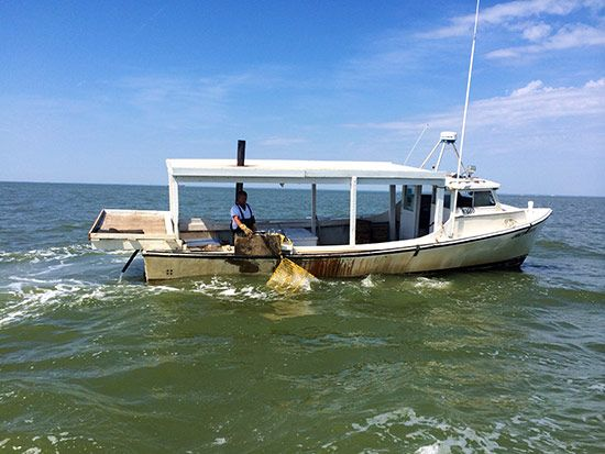 221 best images about Chesapeake workboat on Pinterest | The boat, Virginia and Boats