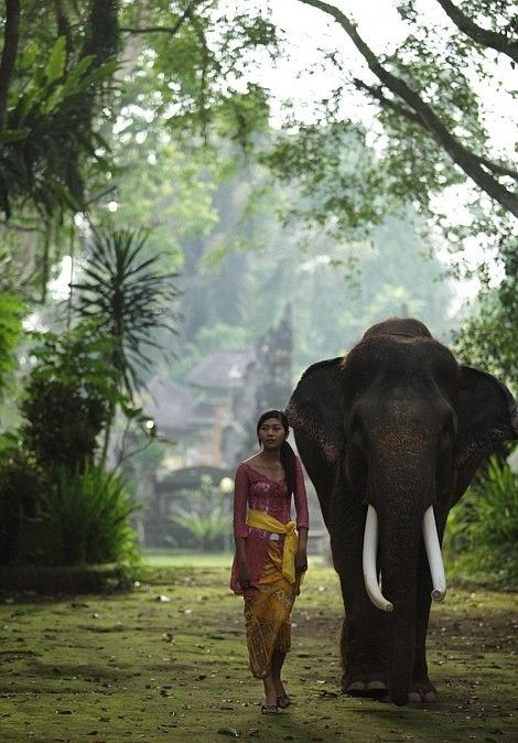 The Elephant Safari Park & Lodge at Taro, Bali