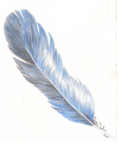 Blue Feather Sketch | +BIRDS FEATHERS | Pinterest