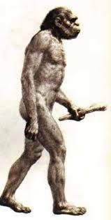 112 best Homo habilis images on Pinterest
