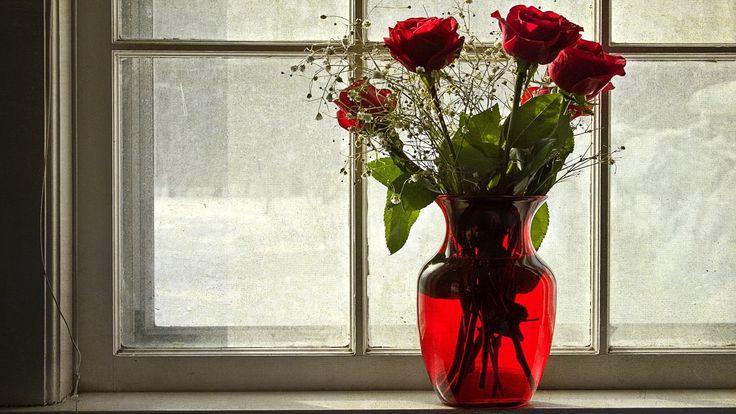 Roses Vase Window Flowers HD Wallpapers