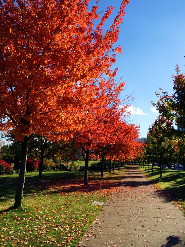 Stanley park in Vancouver. Colored leavs!beautiful fine day!!!